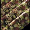 cristaux verts